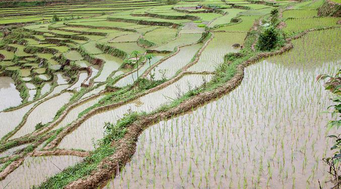 Nostalgie de la rizière de Anna Moï