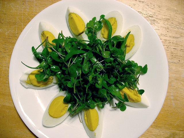 La mâche, Une petite salade pour l'hiver