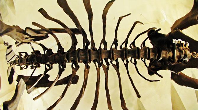 Le titanosaure de Tanzanie