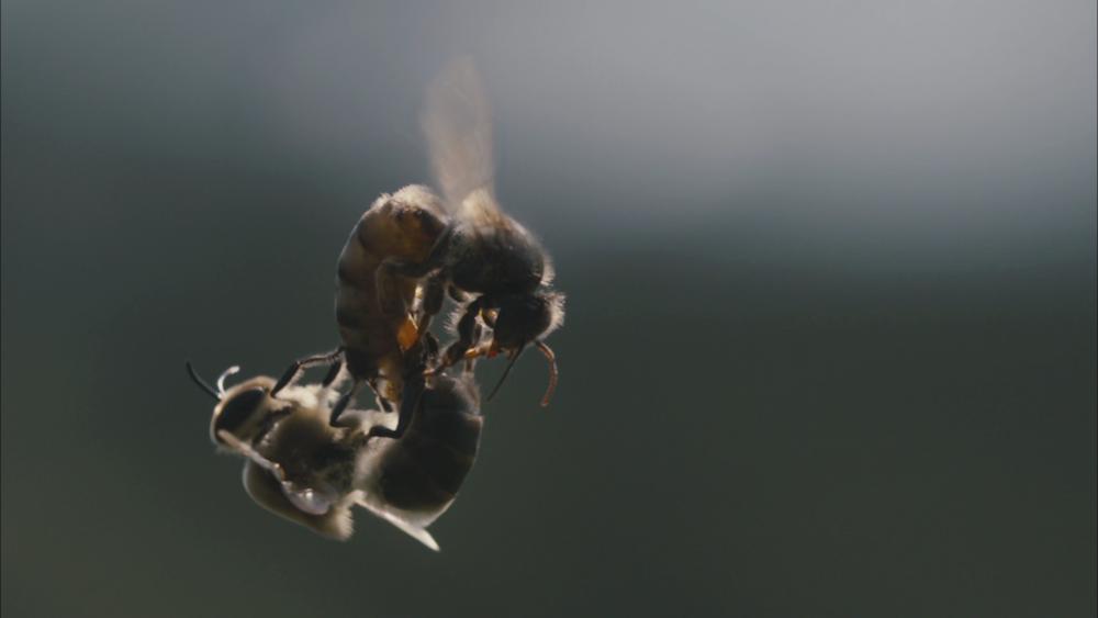 Des hommes et des abeilles Markus Imhoof