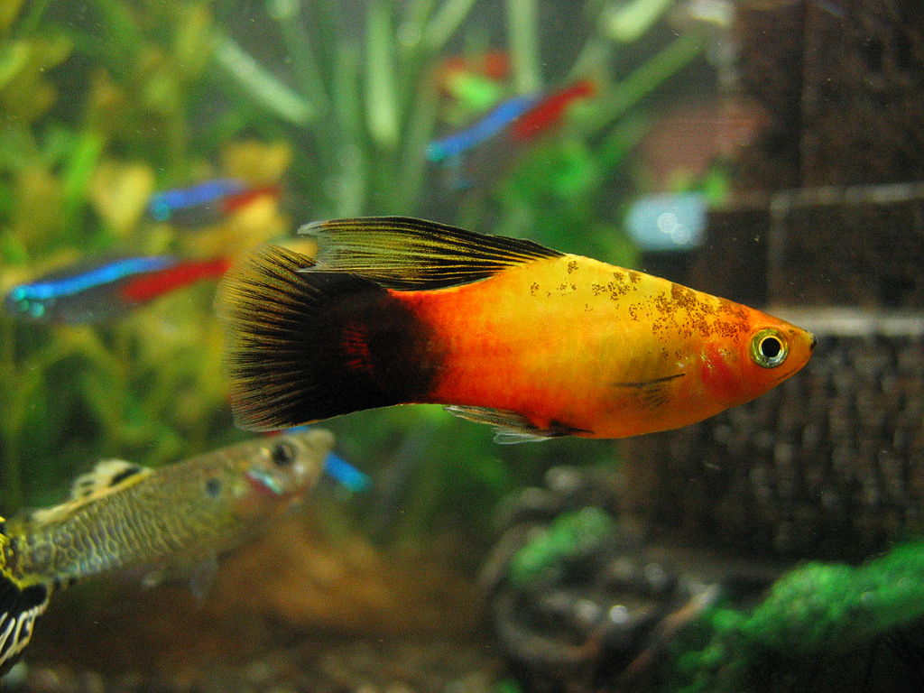 Les poissons ne connaissent pas l'adultère de Carl Aderhold