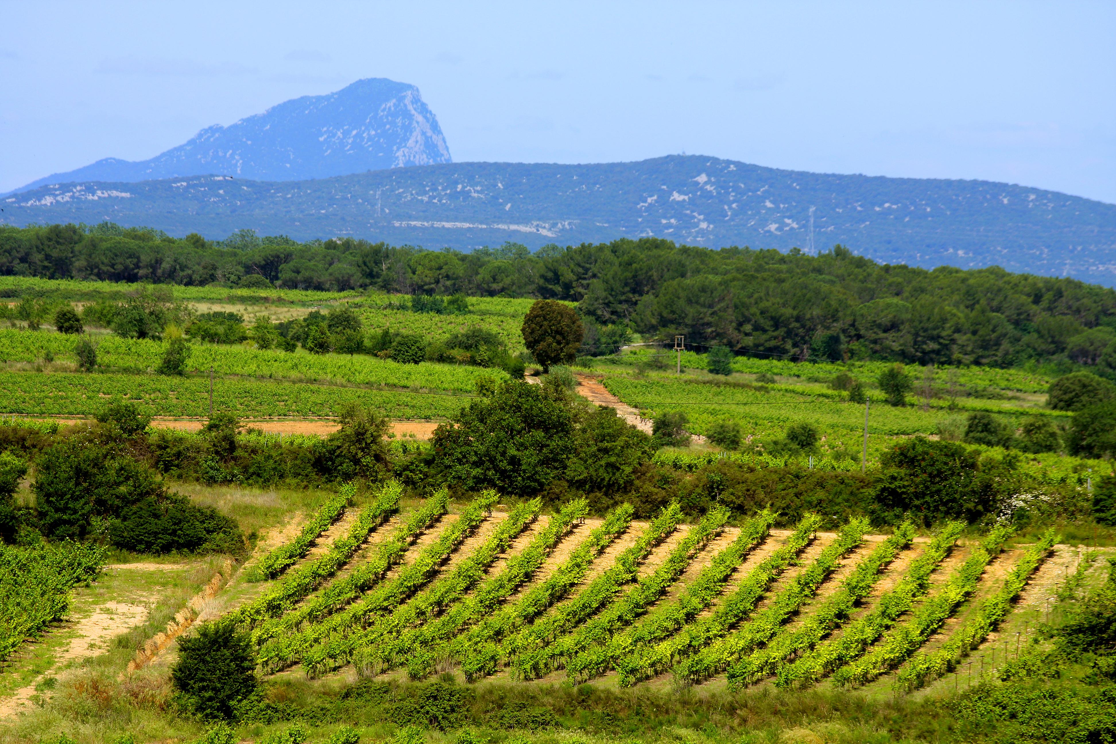 Le vin, un art de vivre et un terroir