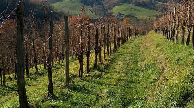 Quelques vins du sud-ouest