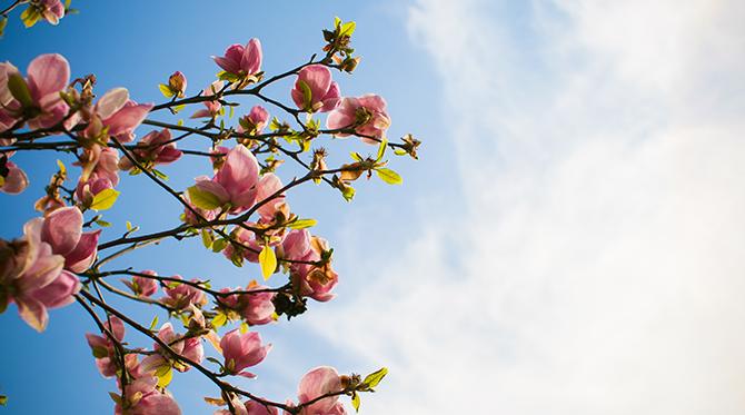 Voilà le printemps !